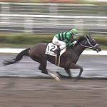 11/17福島2R:スターリーパレードは6枠12番