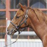 馬名決定:フォレスタレガーロの2018
